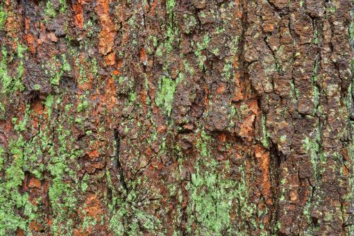 Free Stock Photo of Wood Bark Lichen