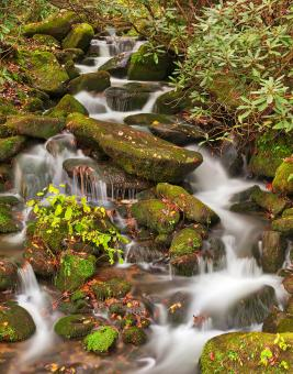 Free Stock Photo of Smoky Mountain Moss Waterfall