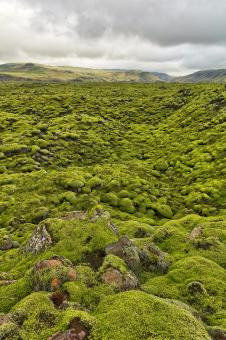 Free Stock Photo of Rugged Green Moss of Iceland