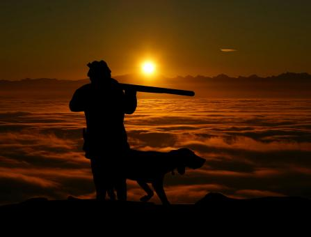 Free Stock Photo of Hunting and Dog Silhouette