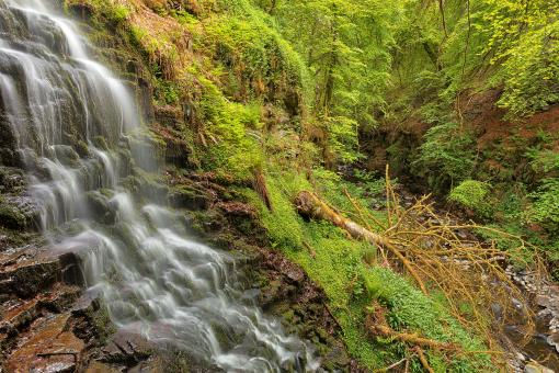 Free Stock Photo of Aberfeldy Fell Tree Falls