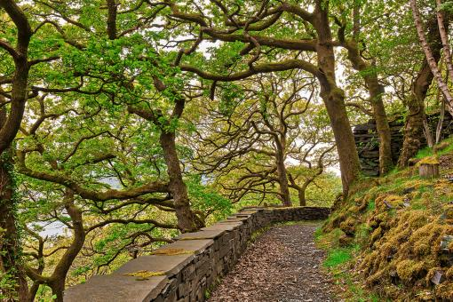 Free Stock Photo of Dinorwic Woods Trail