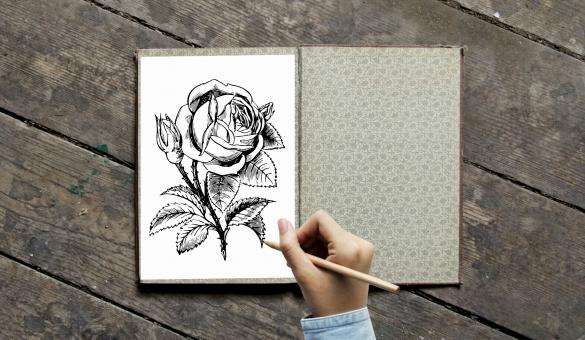 Free Stock Photo of Coloring book with Rose