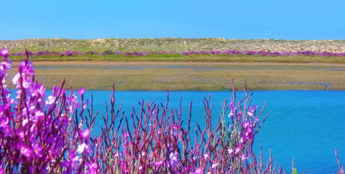 Free Stock Photo of Ria Formosa Natural Park - Algarve - Portugal