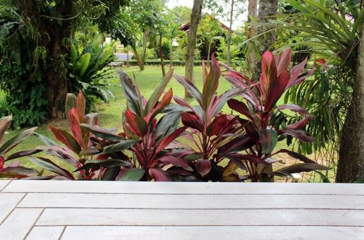 Free Stock Photo of Tropical garden background with foreground of white wooden decking