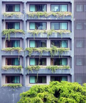 Free Stock Photo of Modern apartment building windows with green plants