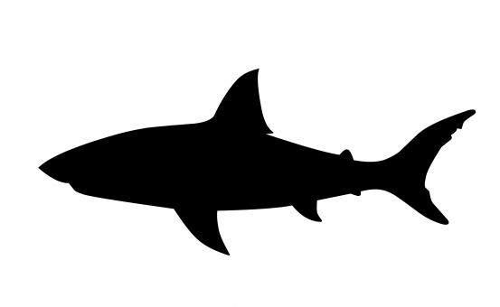 Free Stock Photo of Shark Silhouette