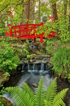 Free Stock Photo of Japanese Bridge Stream - Clyne Gardens