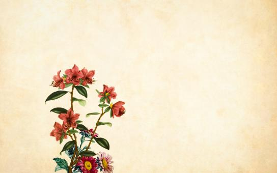 Free Stock Photo of Red Flower on Vintage Background