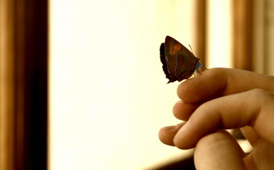 Free Stock Photo of A little butterfly has sat down on the hand
