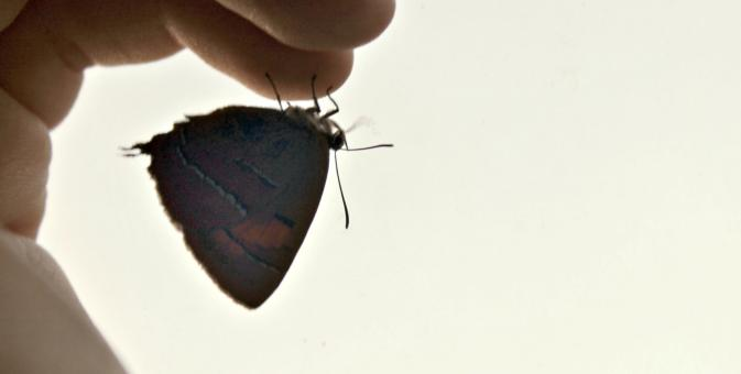 Free Stock Photo of The butterfly is sitting on a finger