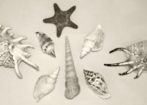 Free Stock Photo of Assorted Shells