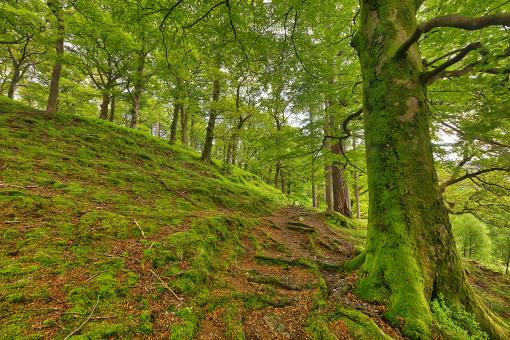 Free Stock Photo of Dolbadarn Moss Forest Trail