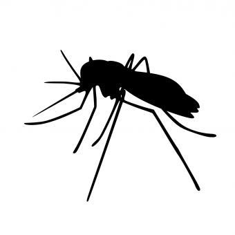 Free Stock Photo of Mosquito Silhouette