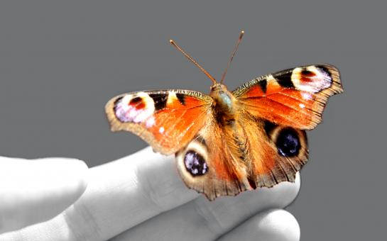 Free Stock Photo of Beautiful butterfly on a hand