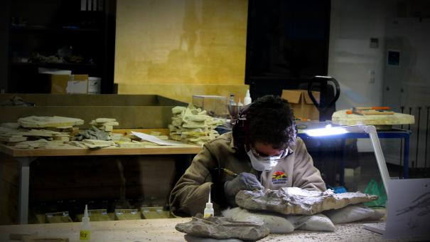 Free Stock Photo of Paleontologist Working on Ichthyosaur Fossil - Lourinha - Portugal