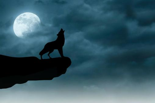 Free Stock Photo of Night Wolf