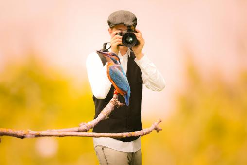 Free Stock Photo of Hummingbird Photographer