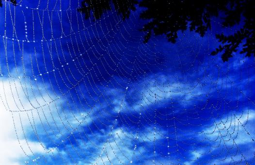 Free Stock Photo of  Dew Drops On Spider Web - A New Morning
