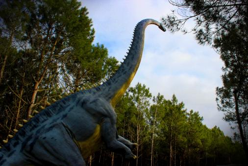 Free Stock Photo of Diplodocus - Dinosaurs - Sauropods - Jurassic Period
