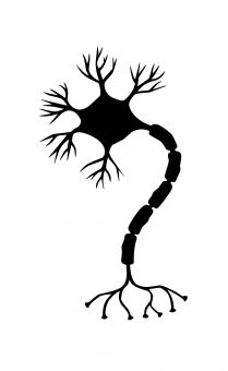 Free Stock Photo of Nerve Cell Silhouette