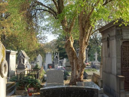 Free Stock Photo of Soft autumn light on a cemetery in Paris, France