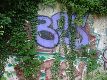 Free Stock Photo of Violet street art enhanced by poison ivy