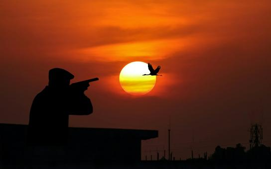 Free Stock Photo of Hunting bird at sunset