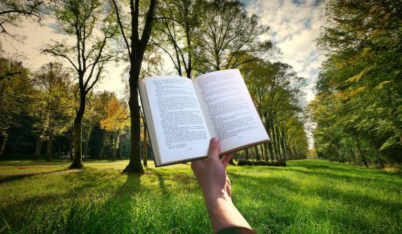 Free Stock Photo of Reading Book in the Woods