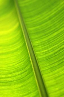 Free Stock Photo of Backlit green tropical leaf abstract background