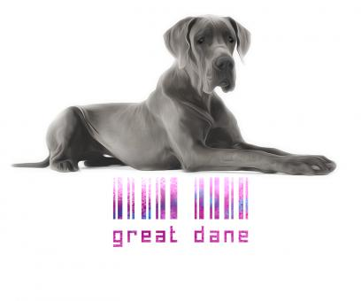Free Stock Photo of Great Dane