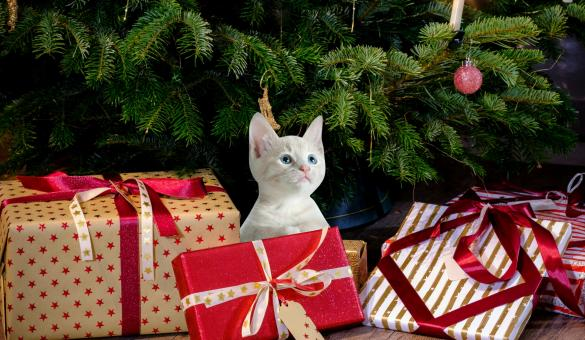 Free Stock Photo of Christmas Kitten