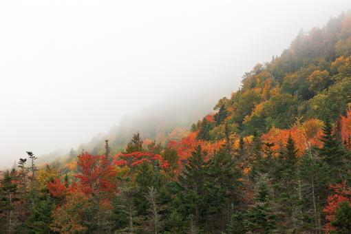Free Stock Photo of Autumn Fog of White Mountain National Forest
