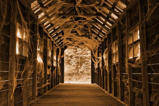 Free Stock Photo of Covered Cobweb Bridge - Sepia Shivers