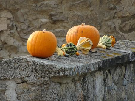 Free Stock Photo of Unforgettable beauty of pumpkins and others