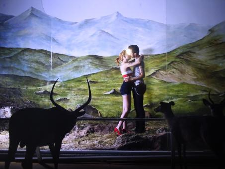 Free Stock Photo of Diorama exhibition in a museum of modern art