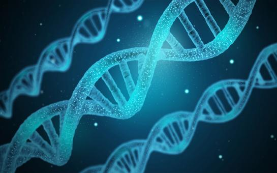 Free Stock Photo of DNA - Genetics - Genes