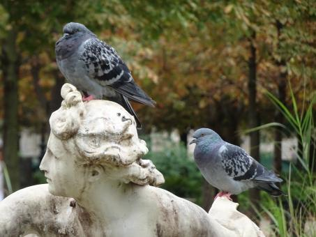 Free Stock Photo of Two grey pigeons on a stone sculpture