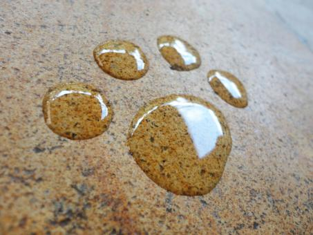 Free Stock Photo of Paw animal foot water hand drawn