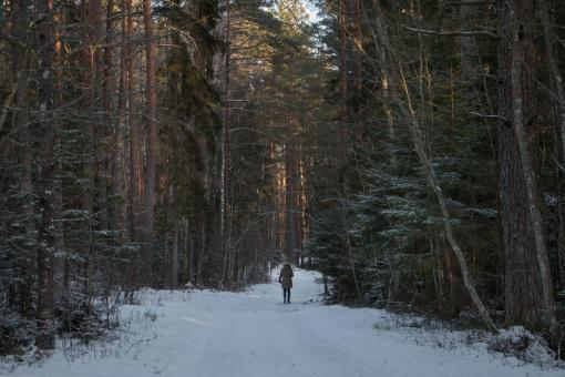 Free Stock Photo of Walk in the winter forest