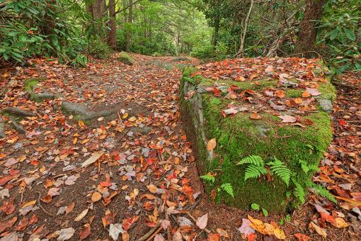 Free Stock Photo of Autumn Moss Boulder Trail