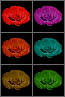 Free Stock Photo of Multi-coloured roses