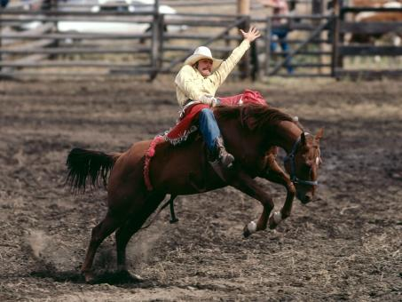 Free Stock Photo of Rodeo