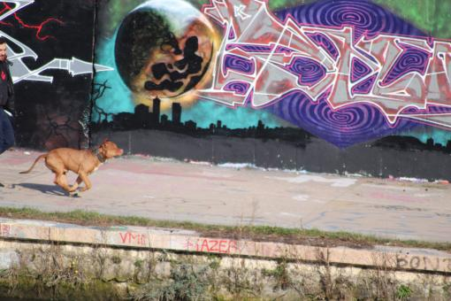Free Stock Photo of Dog running in front of a wall painting