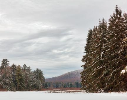 Free Stock Photo of New Germany Winter Pine Park