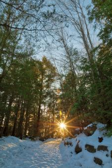Free Stock Photo of Frozen Sunset Forest Trail