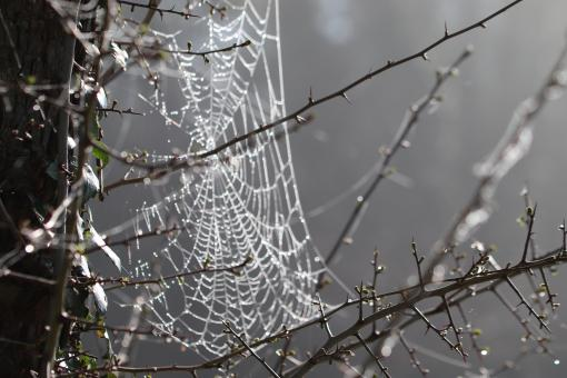 Free Stock Photo of Spiderweb with morning dew