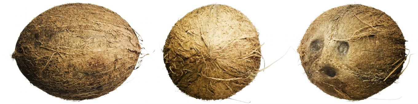 Free Stock Photo of Coconuts