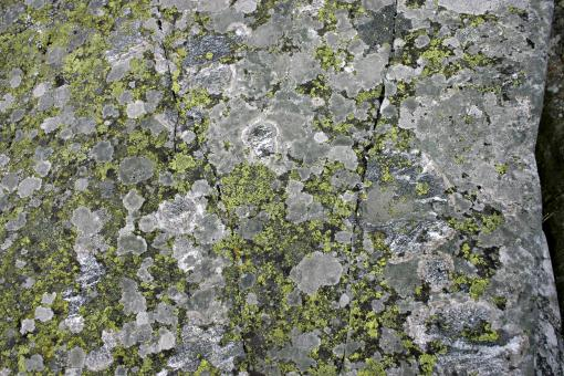 Free Stock Photo of Rock with Lichen