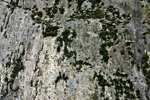Free Stock Photo of Rock Surface with Moss